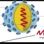 Figure 2:Zikavirus structure (Kauret al., 2016)