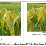 Figure 10: Fig. 10. (A) Apply as an Input Image (B) Yellow Rust Disease Detected