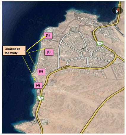 Figure 1. The study sites in Haql city on the Gulf of Aqaba