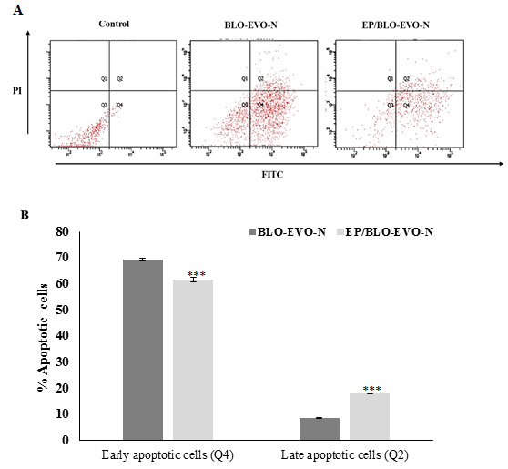 Figure 5. A FITC/PI flow cytometry plots of A549 cells subjected to the formulation. Cells were treated with the IC50 of BLO-EVO-N and EP/BLO-EVO-N for 24 h. Cells were categorized as necrotic (Q1), late apoptotic (Q2), viable (Q3), and early apoptotic cells (Q4). B Bar chart reveals the percentages of A549 cells undergoing apoptosis. Data were expressed as mean ± SD (n = 3). Error bars display the ± SD. The independent t-tests assessed the P-values. The (***) referred to the very highly significant differences (P < 0.001).