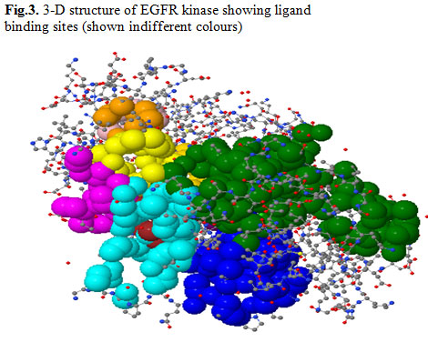 Fig.3. 3-D structure of EGFR kinase showing ligand binding sites (shown indifferent colours)