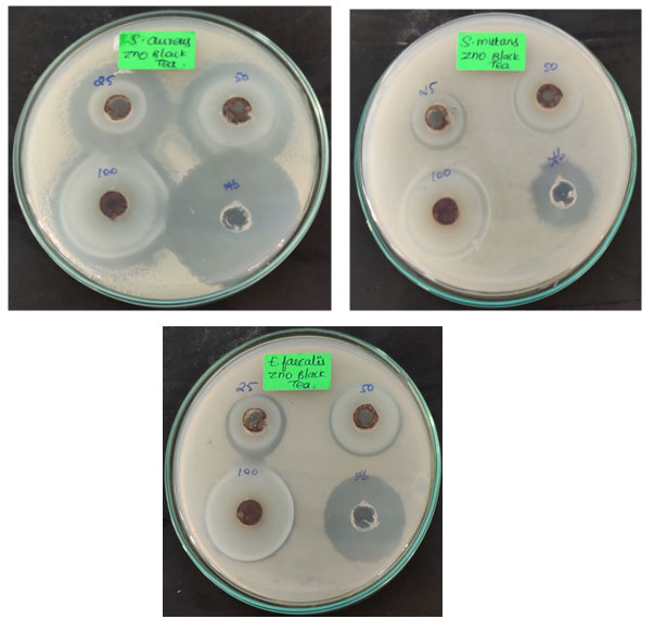 Fig 3: Antibacterial activity of black tea mediated zinc oxide nanoparticles against oral pathogens.
