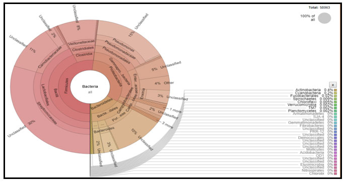 Fig 8: Krona chart of the bacteria represented by 16S rRNA gene amplicon-based bacterial diversity in domestic liquid waste. Each circle represents the phylum, class, order, family, genus, and species from the inside to the outside of the circle, respectively, indicated by percent diversity based on the absolute number of representative bacteria