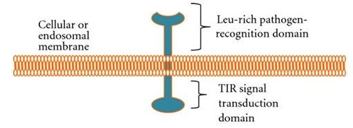 Figure 1: Schematic diagram of TLR (Muccioli et al. 2012).