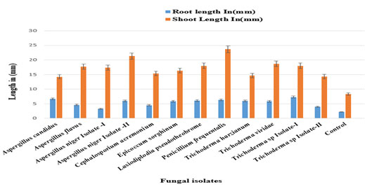 Fig 06: Efficacy of fungal formulations on Fusarium wilt of Cajanus cajan (Pigeon pea) under greenhouse conditions (Root and shoot length)