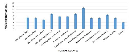 Fig 07: Efficacy of fungal formulations on Fusarium wilt of Cajanus cajan (pigeon pea) under greenhouse conditions (Number of leaves).