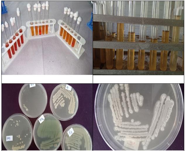 Fig 4a: Microbial growth on nutrient agar plates