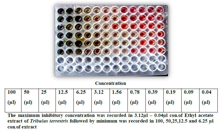 Figure 7:(A,B)Seeds ofCeropegia bulbosaRoxb. var.bulbosa