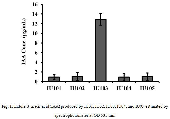 Figure 1:Indole-3-acetic acid (IAA) produced by IU01, IU02, IU03, IU04, and IU05 estimated by spectrophotometer at OD 535 nm