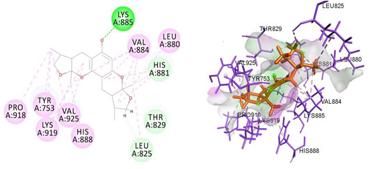 Figure 3. Docked poses of PGR druggable cavity with xyloketal B. Interactions are shown as dashed lines between receptor residues and ligand atoms. Residues highlighted in Green (Lys 885) mediates the hydrogen bond,then His 881,Thr 829,Leu 825 formed the carbon hydrogen bond and residues Leu 880, Val 884, Val 925, His 888, Lys 919, Tyr 753, Pro 918 involves in pi-Alkyl interaction with the receptor PGR.