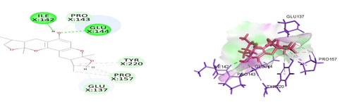Figure 4. Docked poses of STAT3 druggable cavity with xyloketal B.Interactions are shown as dashed lines between receptor residues and ligand atoms. Residues highlighted in Green (Leu 438) mediates the hydrogen bond, then His 437, Ser 381, Leu 378 and Gly 373 formed the carbon hydrogen bond and residues Lys 383, Val 490, Ala 377 involves in pi-Alkyl interaction pink colored dashed lines,Asp 369 mediated pi cation interaction with the receptor STAT3.