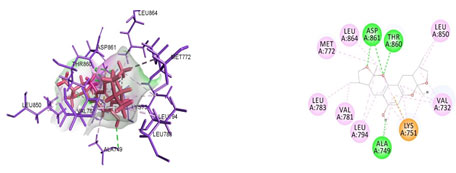 Figure 9. Docked poses of MMP9 druggable cavity with xyloketal B. Interactions are shown as dashed lines between receptor residues and ligand atoms. Residues highlighted in Green (Arg 162,Gln 169) mediates the hydrogen bond, residues Val 167,His 203,Ile 198 involves in pi-Alkyl interaction with the receptor MMP 9.